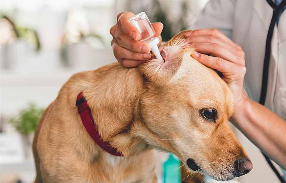 kutya fültisztítás